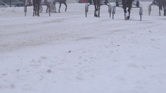 Race horse legs with riders in wheel carts warm up on snowy track in winter. 4K Stock Footage
