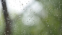 Fresh rain splash drops on a window with background green nature in Blur Stock Footage