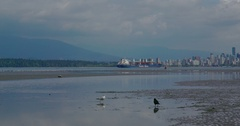 Camera pans right across the beach while some birds are on the shore. Stock Footage