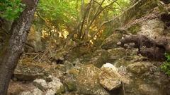 Valley of butterflys (PETALOUDES, Rhodes, greece) Stock Footage