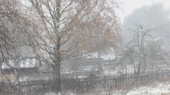First snow. Birch with yellow leaves in a Blizzard. Stock Footage