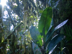 Sunlight shines through forest canopy highlights large leaves of tropical plant Stock Footage