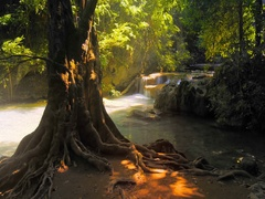 Beautiful nature landscape of big old tree on  water stream bank with waterfall Stock Footage