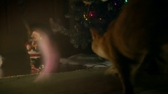 Red cat runs near a Christmas tree and a toy touches Stock Footage