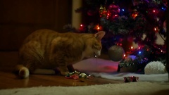 Ginger cat eats tinsel Stock Footage