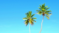 Vivid 4k hdr video of two tall palm trees isolated on blue sky at summer day Stock Footage