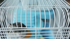 Close up. A jungar hamster in a cage. Stock Footage
