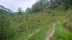 The review of rice terraces on the island of Bali. It is possible to wander Stock Footage