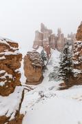 Winter Snow Falling on Bryce Canyon National Park Hoodoos Stock Photos