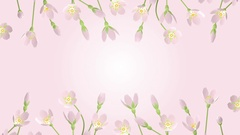 3D Blooming Cherry blossoms animation frame - line Stock Footage