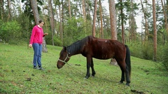 Cute girl tourist feeding and stroking a horse Stock Footage
