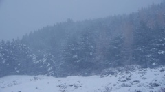 A wintry day with heavy snow blizzard in the forests of the mountains Stock Footage