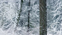 Passing Beautiful Winter Forest With Snow Falling Stock Footage