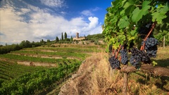 Time lapse of Chianti vineyard landscape in autumn, Tuscany, Italy Stock Footage