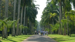 People walking in Royal Botanical Garden, Peradeniya, Kandy, Sri-Lanka Stock Footage