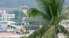 Beautiful landscape with palm tree and airplane drives along airport terminal Stock Footage