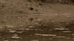 Rack focus of fast-moving muddy water and riverbank Stock Footage