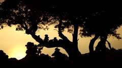 Silhouette of trees at Monolithos Castle in the sunset. Rhodes, Greece Stock Footage