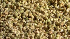 Green raw buckwheat sprouts rotating, close up overhead coming closer view Stock Footage