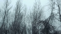 Driving pov side view bare treetop forest in winter afternoon Stock Footage