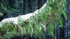 Ferns On Tree Trunk In Snowfall Stock Footage