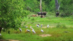Yala national park in Sri Lanka landscape with wild animals in reserved forest Stock Footage