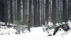 Passing Path Through Woods In The Snow Stock Footage