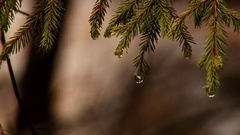 Water droplet on tree branch Stock Footage