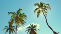 Serene background of sun light shines through coconut palm trees leaves Stock Footage
