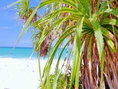 Exotic tropical plants grow on beach of sea coast in hot climate at summer Stock Footage