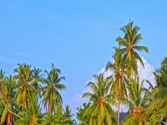 Many palm trees growing on sea coast as seen from boat in Sri Lanka at summer Stock Footage