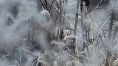 Morning frost in winter season Stock Footage