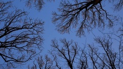 Treetops in Winter Bare Forest Stock Video Stock Footage