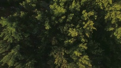 Aerial top view of tree top, camera moves to the hotels district and then to Stock Footage