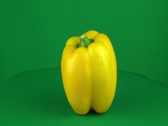 Yellow Pepper Rotating in Green Screen Chroma Key Matte Stock Footage