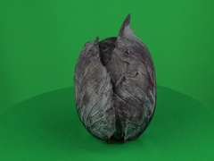 Black Cabbage Rotating in Green Screen Chroma Key Matte Stock Footage
