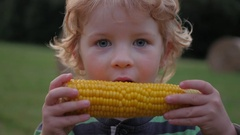 Blonde young boy with curly hair eating corn on the cob Stock Footage