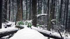 Forest Logs Buried In The Snow Stock Footage