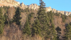 Early morning, fir and deciduous forest, steep rocky ridge, a little bird Stock Footage
