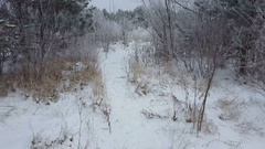 Snowy winter in forest. Snow covered trees. Stock Footage