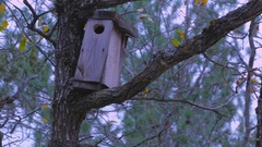 Birdhouse in the woods. A house for birds on a background of trees. Stock Footage