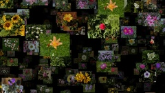 Photo stream of flowers moving DOWN, seamless loop Arkistovideo