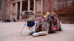 People and camel near Al Khazneh or the Treasury at Petra in Jordan Stock Footage