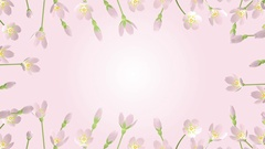 3D Blooming Cherry blossoms animation round frame Stock Footage
