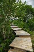 Wooden path in the Uzon Caldera. Kronotsky Nature Reserve Stock Photos