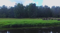 River shore with herdsman and cow drove browse on grass Stock Footage