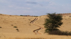 Time lapse of cloud shadows over Kgalagadi desert grassland road Stock Footage