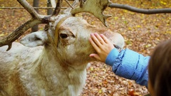 Young girl pats stuffed deer among fallen leaves at autumn day Stock Footage