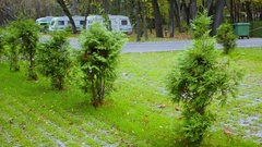 Camping place with grassplot and juniper at autumn day Stock Footage