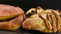 A pair of cooked whole brown crabs. Stock Footage
